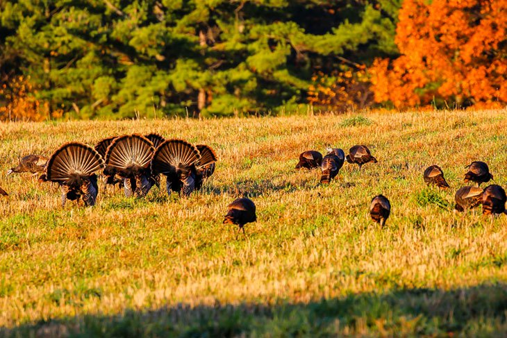 Tips to Remember When Hunting Season Starts